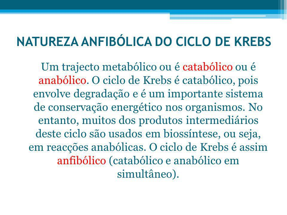 NATUREZA ANFIBÓLICA DO CICLO DE KREBS