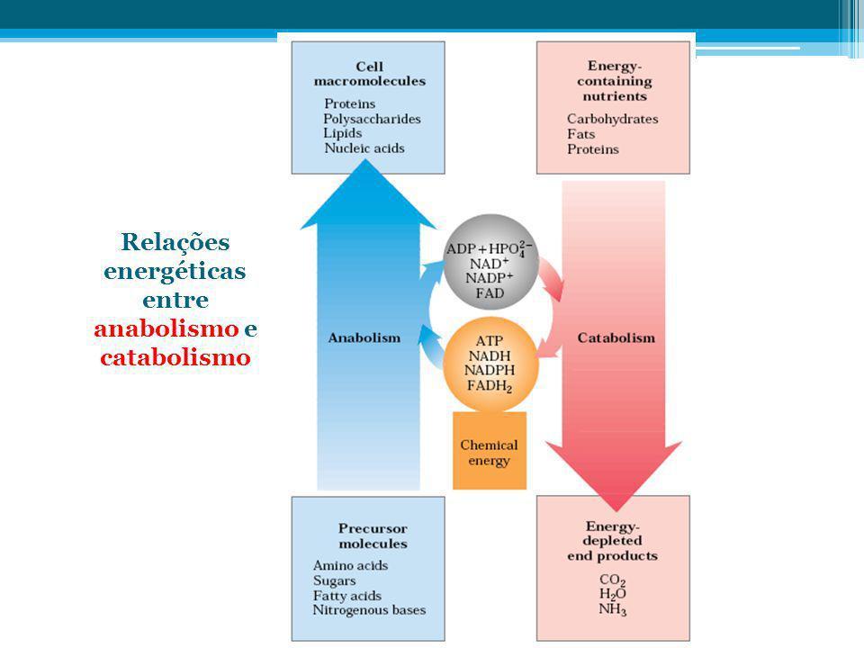 Relações energéticas entre anabolismo e catabolismo