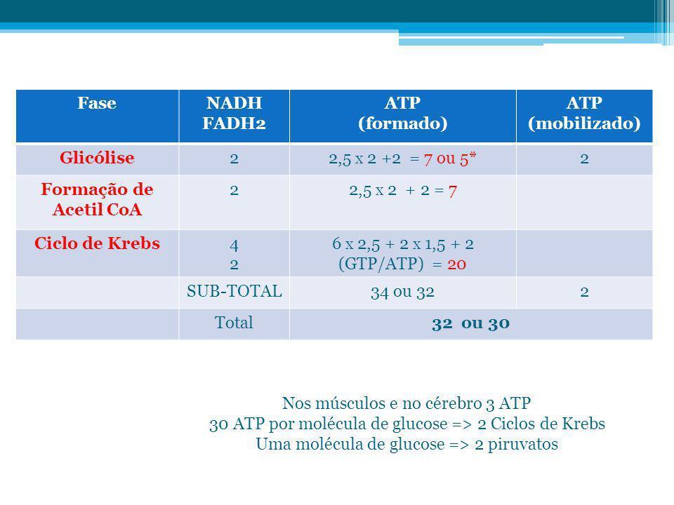 Nos músculos e no cérebro 3 ATP