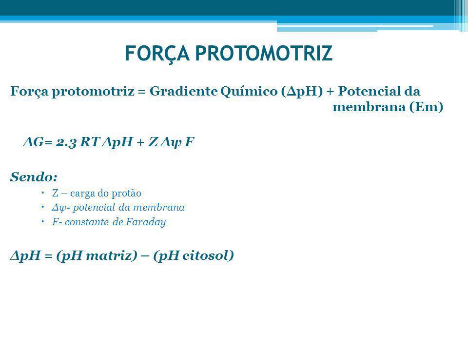 FORÇA PROTOMOTRIZ Força protomotriz = Gradiente Químico (∆pH) + Potencial da membrana (Em)