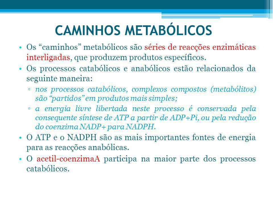 CAMINHOS METABÓLICOS Os caminhos metabólicos são séries de reacções enzimáticas interligadas, que produzem produtos específicos.