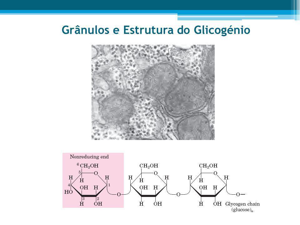 Grânulos e Estrutura do Glicogénio