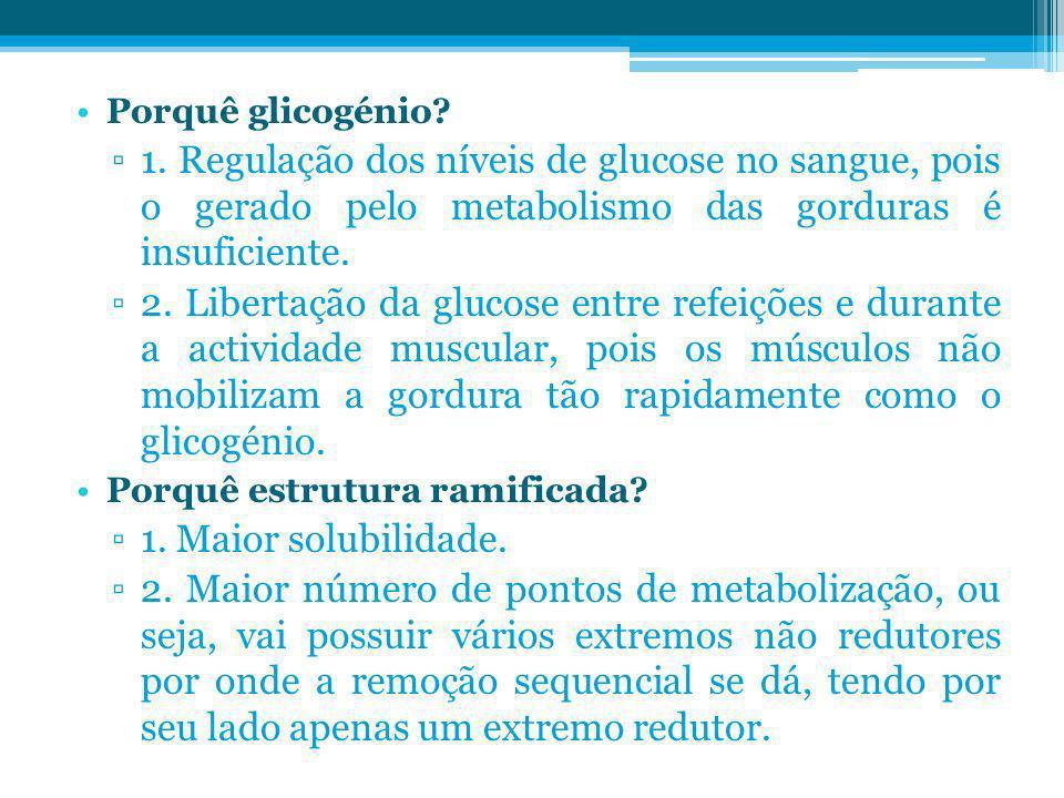 Porquê glicogénio 1. Regulação dos níveis de glucose no sangue, pois o gerado pelo metabolismo das gorduras é insuficiente.