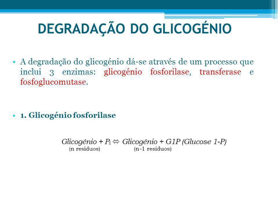 DEGRADAÇÃO DO GLICOGÉNIO