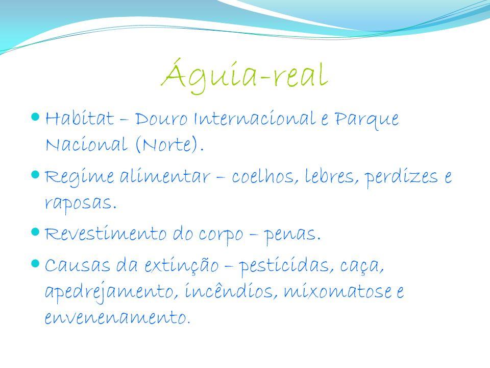 Águia-real Habitat – Douro Internacional e Parque Nacional (Norte).