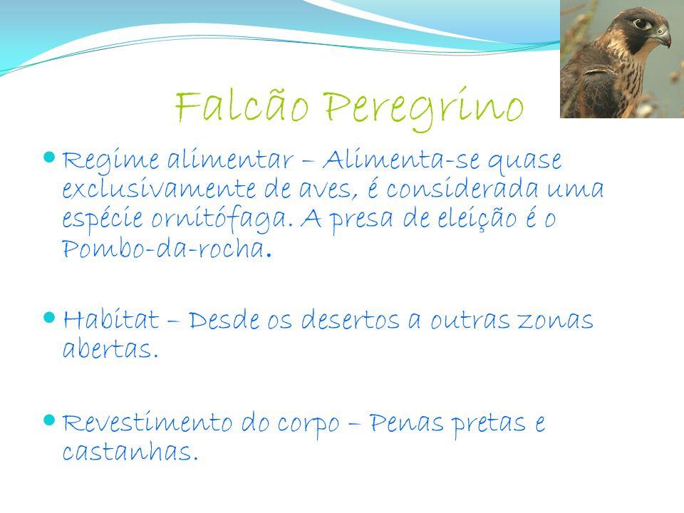 Falcão Peregrino