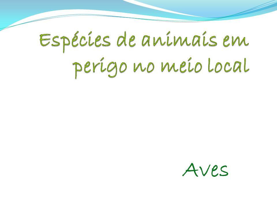 Espécies de animais em perigo no meio local