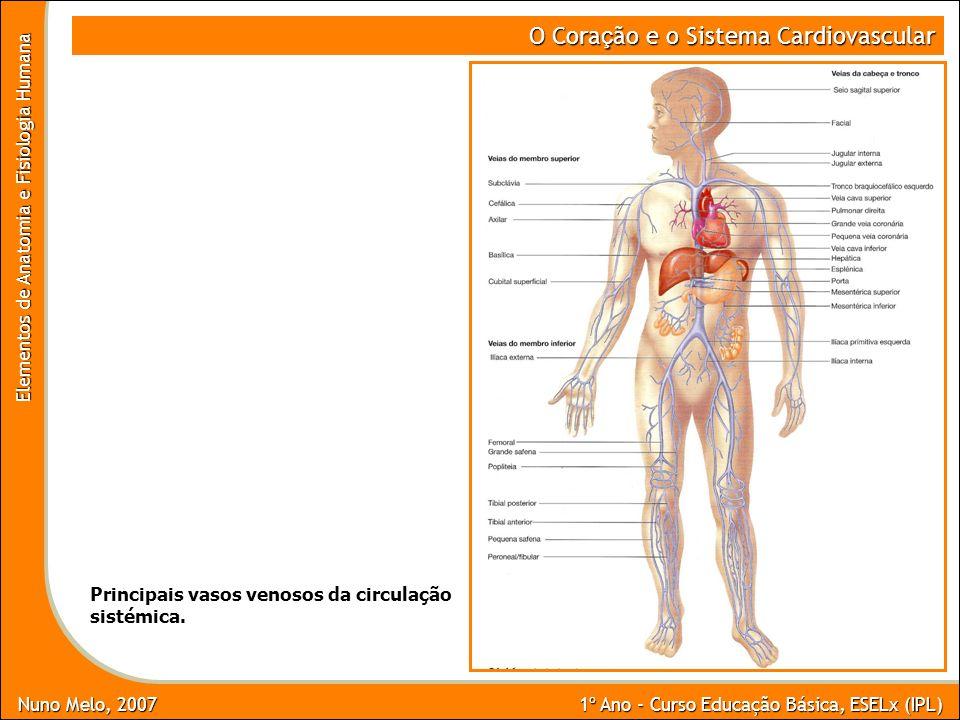 O Coração e o Sistema Cardiovascular