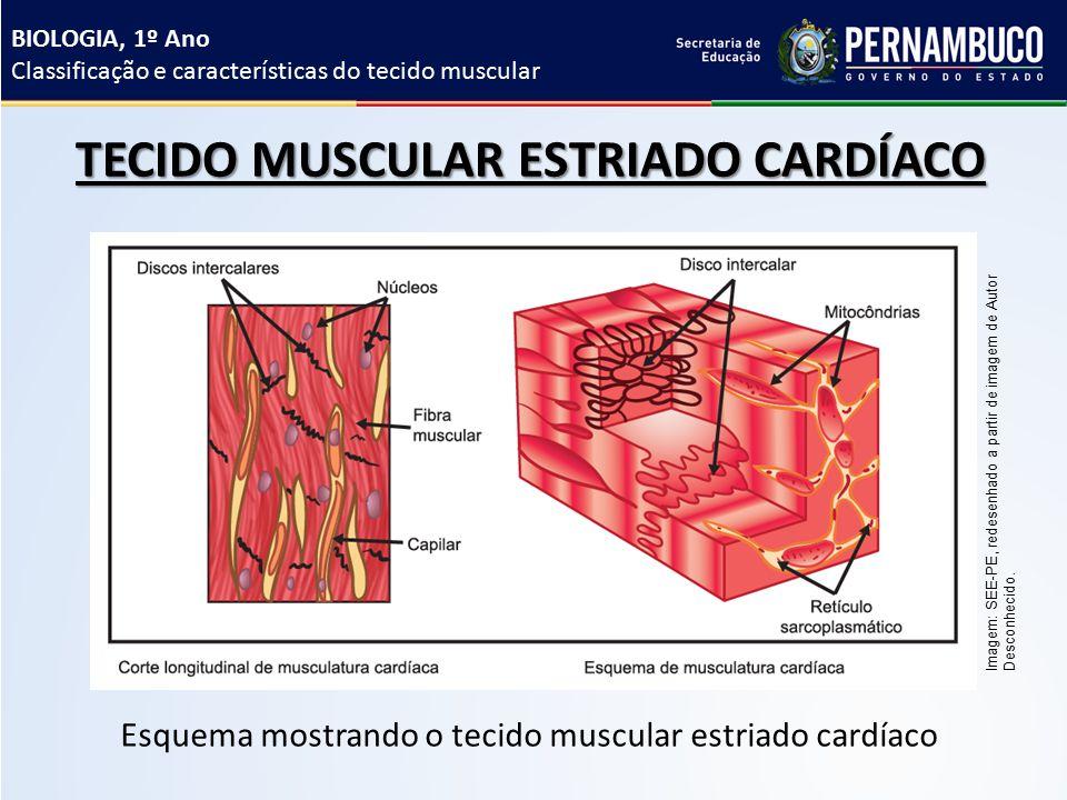 Atractivo Fibras Musculares Cardíacas Friso - Anatomía de Las ...