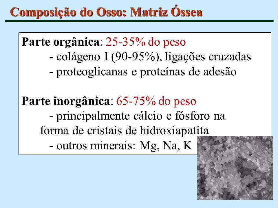 Composição do Osso: Matriz Óssea