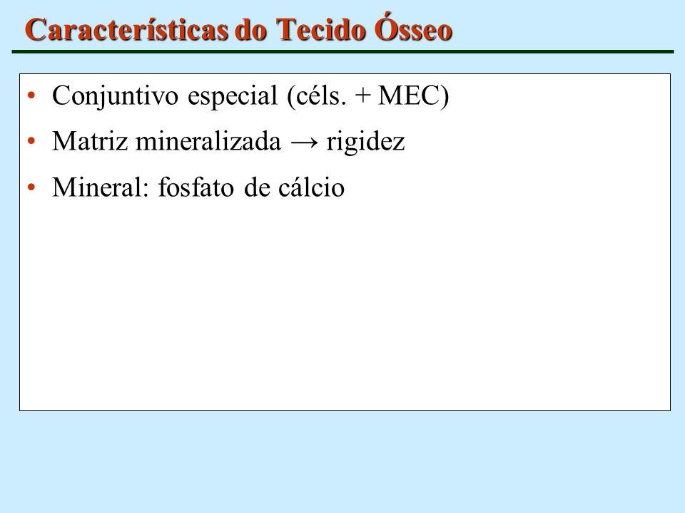 Características do Tecido Ósseo