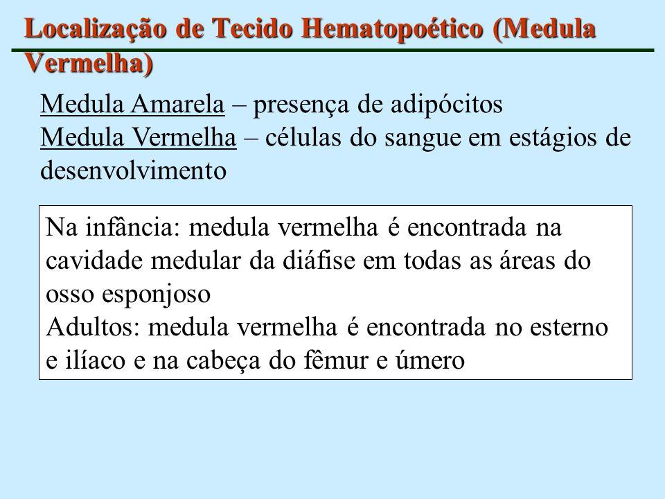 Localização de Tecido Hematopoético (Medula Vermelha)