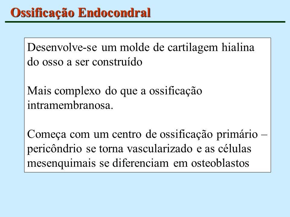 Ossificação Endocondral