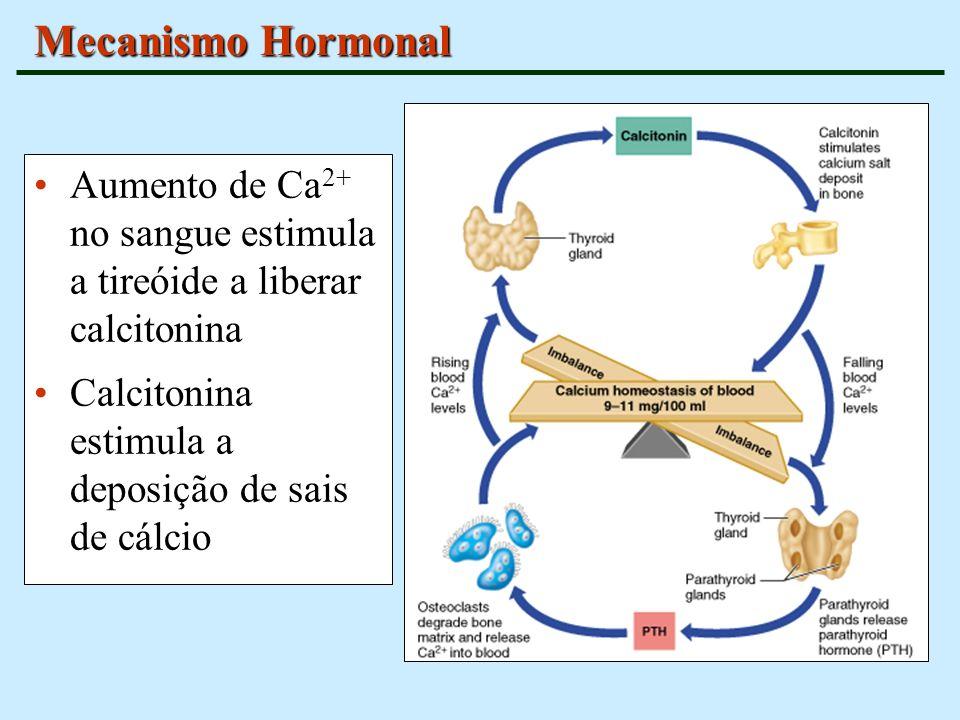 Mecanismo HormonalAumento de Ca2+ no sangue estimula a tireóide a liberar calcitonina.