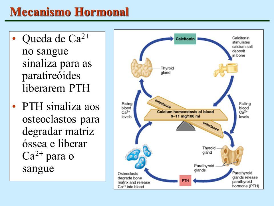 Mecanismo Hormonal Queda de Ca2+ no sangue sinaliza para as paratireóides liberarem PTH.