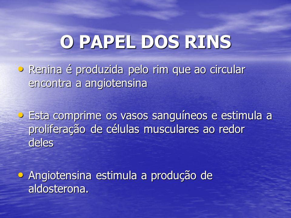 O PAPEL DOS RINS Renina é produzida pelo rim que ao circular encontra a angiotensina.