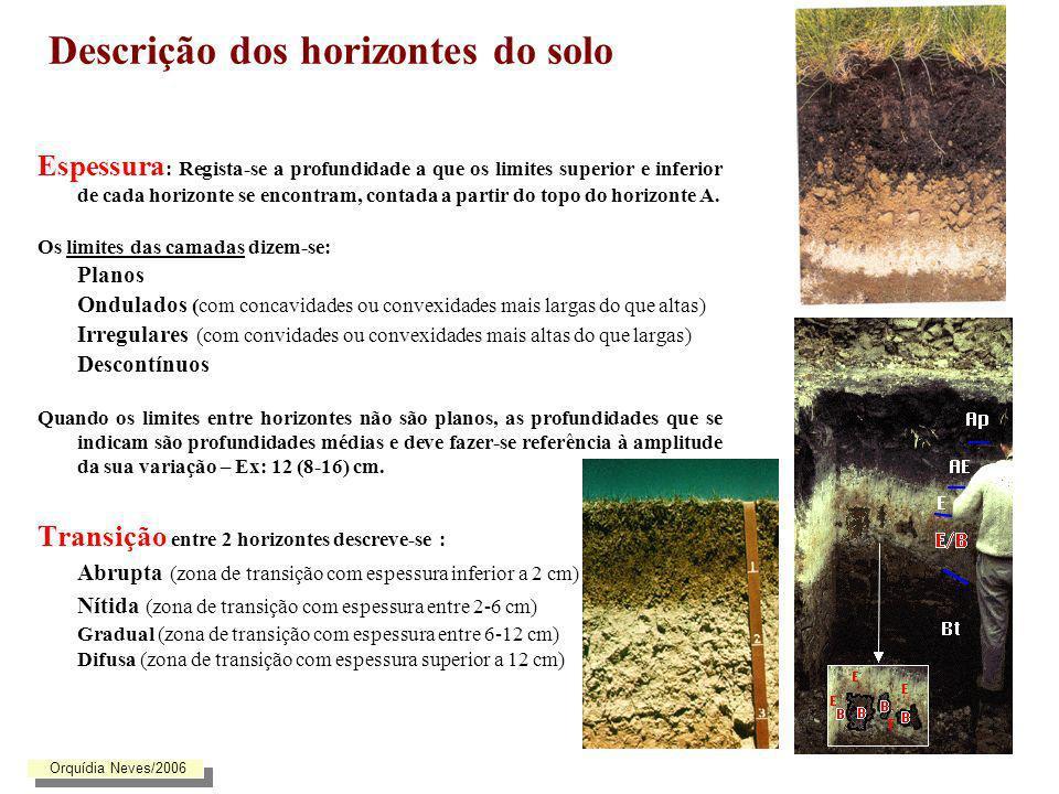 Descrição dos horizontes do solo