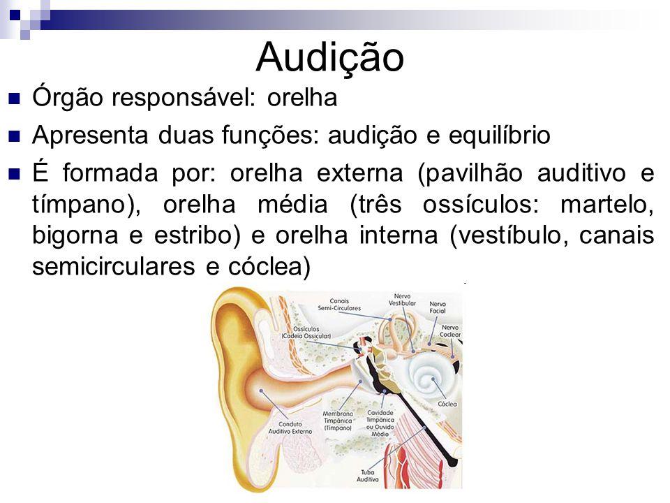 Audição Órgão responsável: orelha