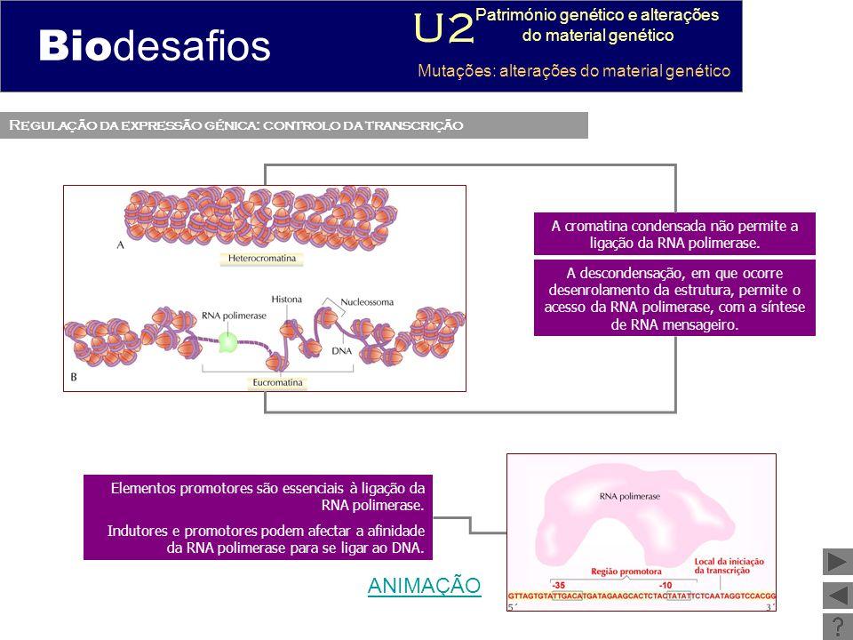 Biodesafios U2 ANIMAÇÃO Património genético e alterações