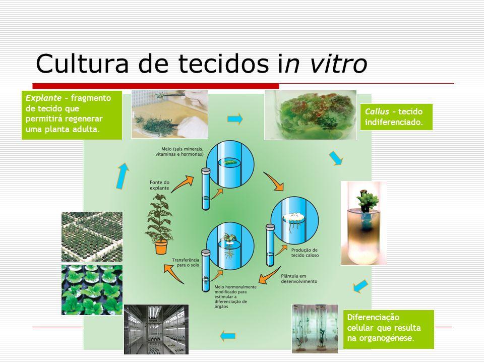 Cultura de tecidos in vitro