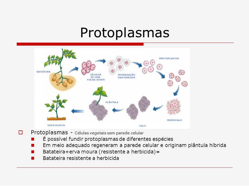 Protoplasmas Protoplasmas - Células vegetais sem parede celular
