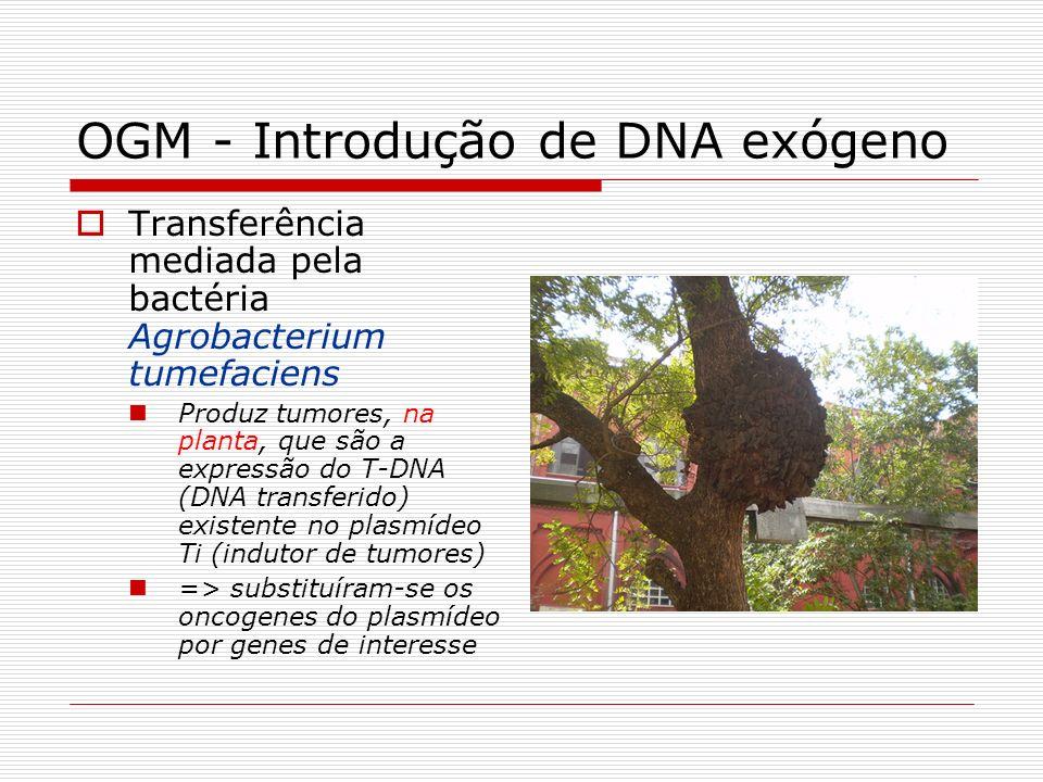 OGM - Introdução de DNA exógeno