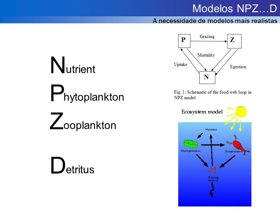 N P Z D Modelos NPZ…D utrient hytoplankton ooplankton etritus