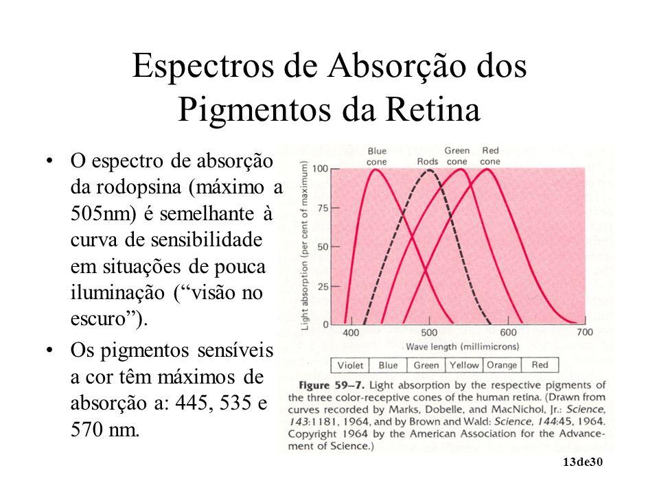 Espectros de Absorção dos Pigmentos da Retina