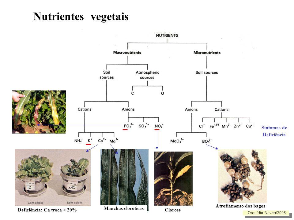 Nutrientes vegetais Sintomas de Deficiência Atrofiamento dos bagos