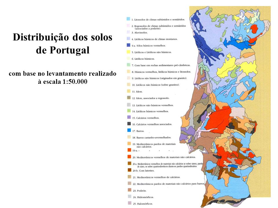 Distribuição dos solos de Portugal com base no levantamento realizado à escala 1:50.000