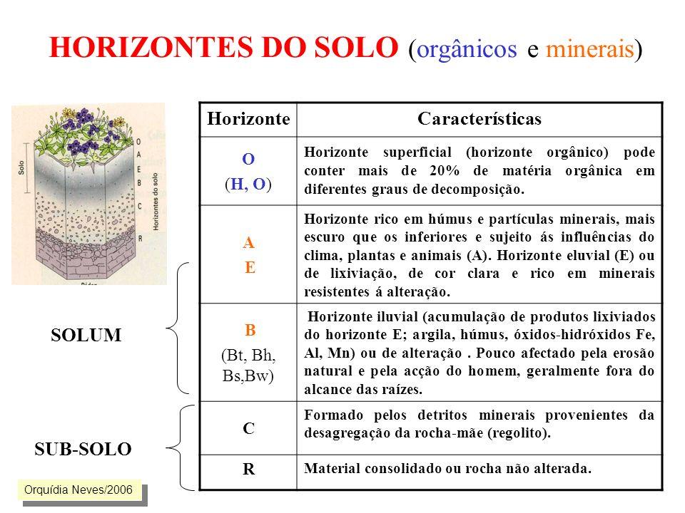 HORIZONTES DO SOLO (orgânicos e minerais)