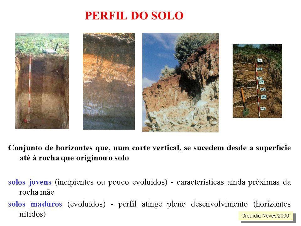 PERFIL DO SOLO Conjunto de horizontes que, num corte vertical, se sucedem desde a superfície até à rocha que originou o solo.