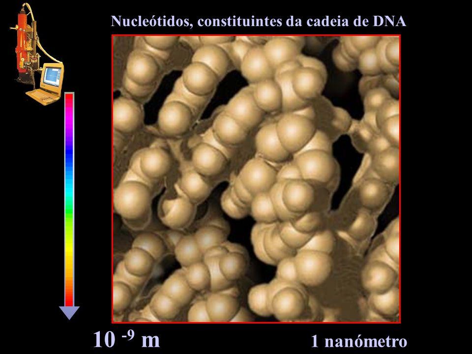 Nucleótidos, constituintes da cadeia de DNA