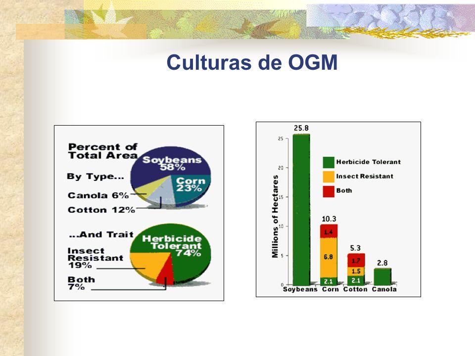 Culturas de OGM