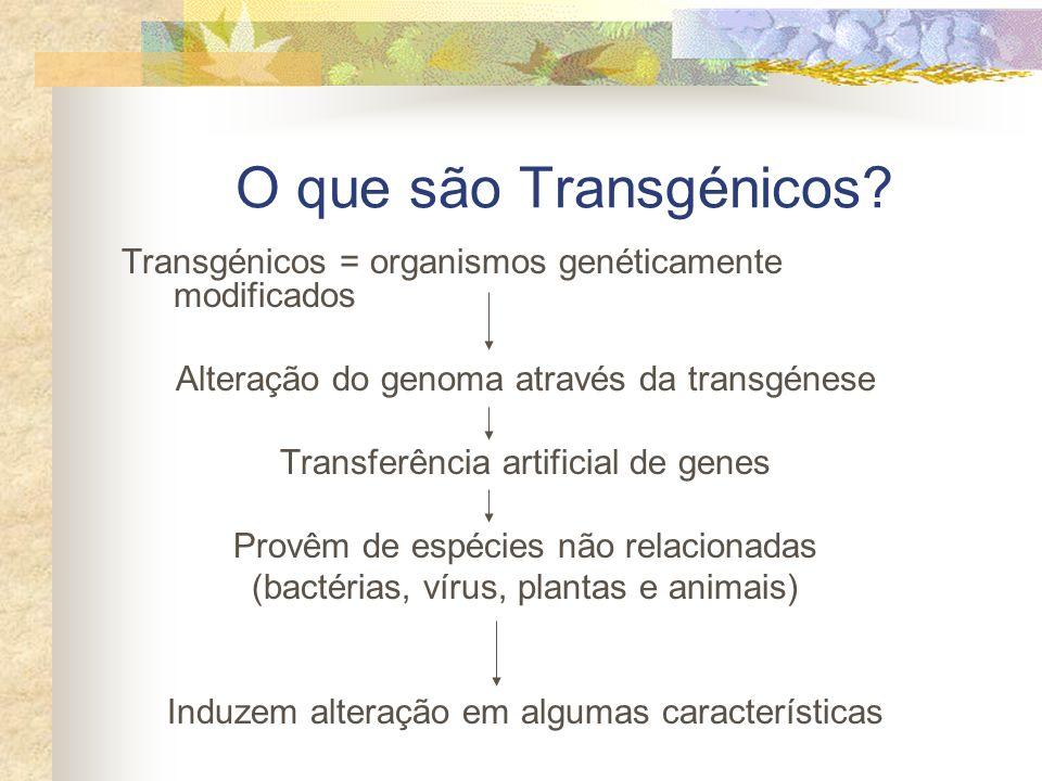 O que são Transgénicos Transgénicos = organismos genéticamente modificados. Alteração do genoma através da transgénese.