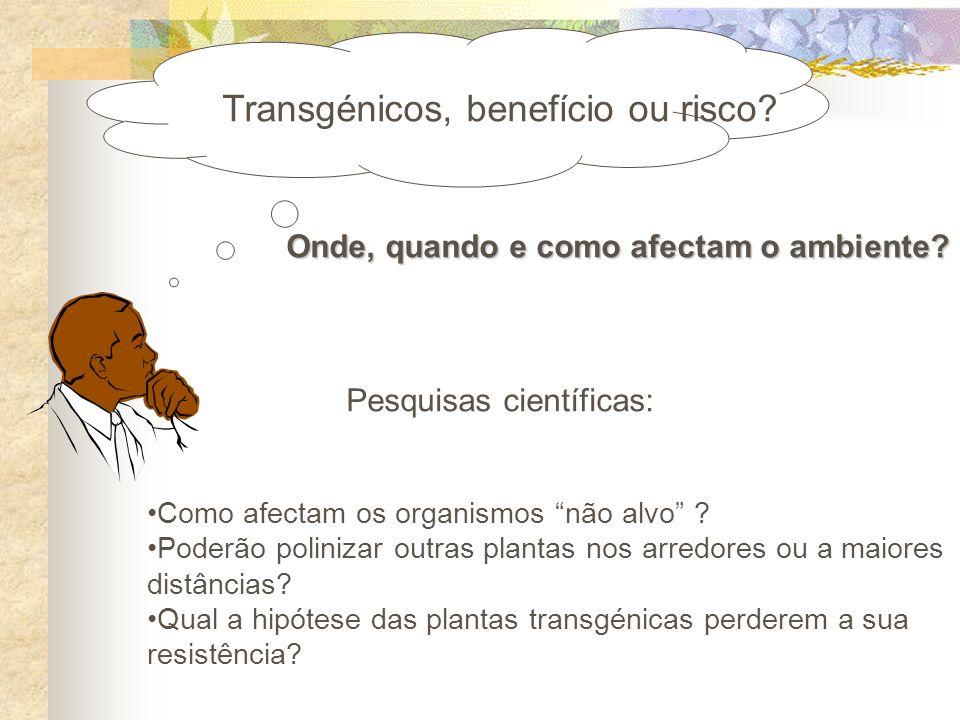 Transgénicos, benefício ou risco