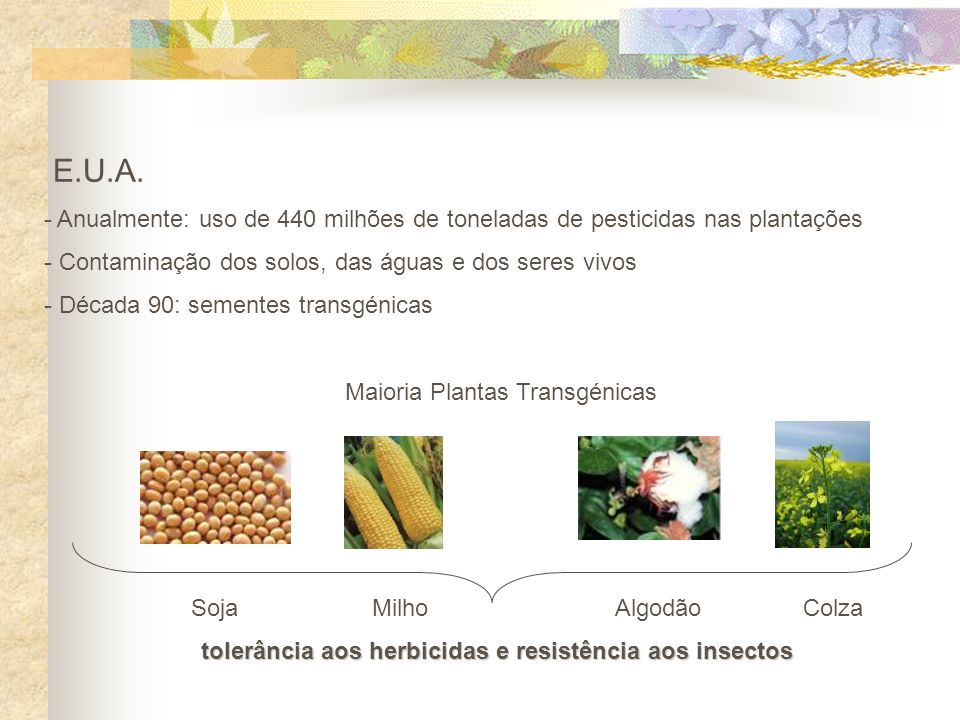 tolerância aos herbicidas e resistência aos insectos