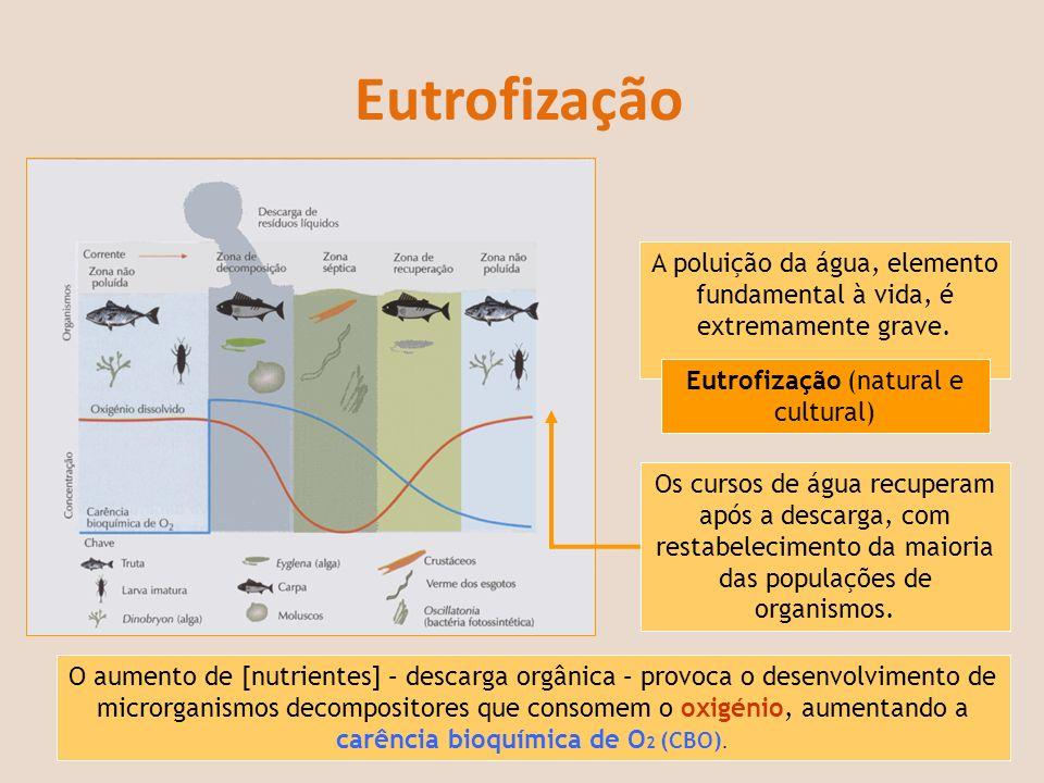 Eutrofização A poluição da água, elemento fundamental à vida, é