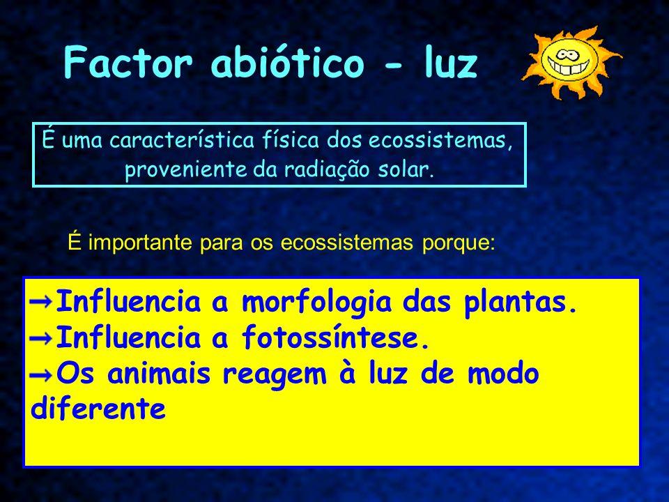 Factor abiótico - luz Influencia a morfologia das plantas.