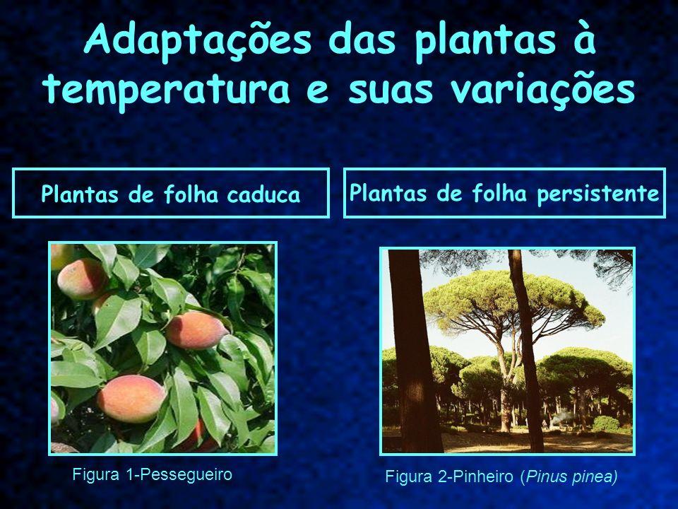Adaptações das plantas à temperatura e suas variações