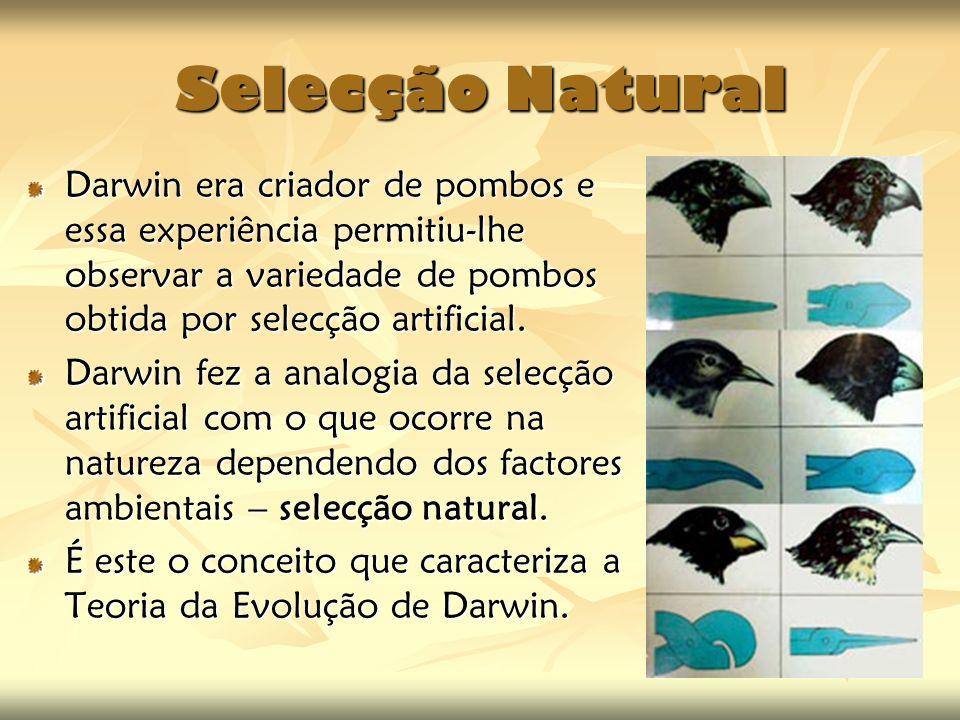 Selecção Natural Darwin era criador de pombos e essa experiência permitiu-lhe observar a variedade de pombos obtida por selecção artificial.