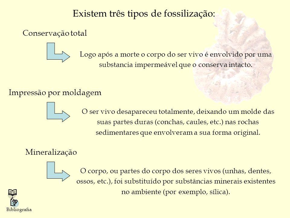 Existem três tipos de fossilização: