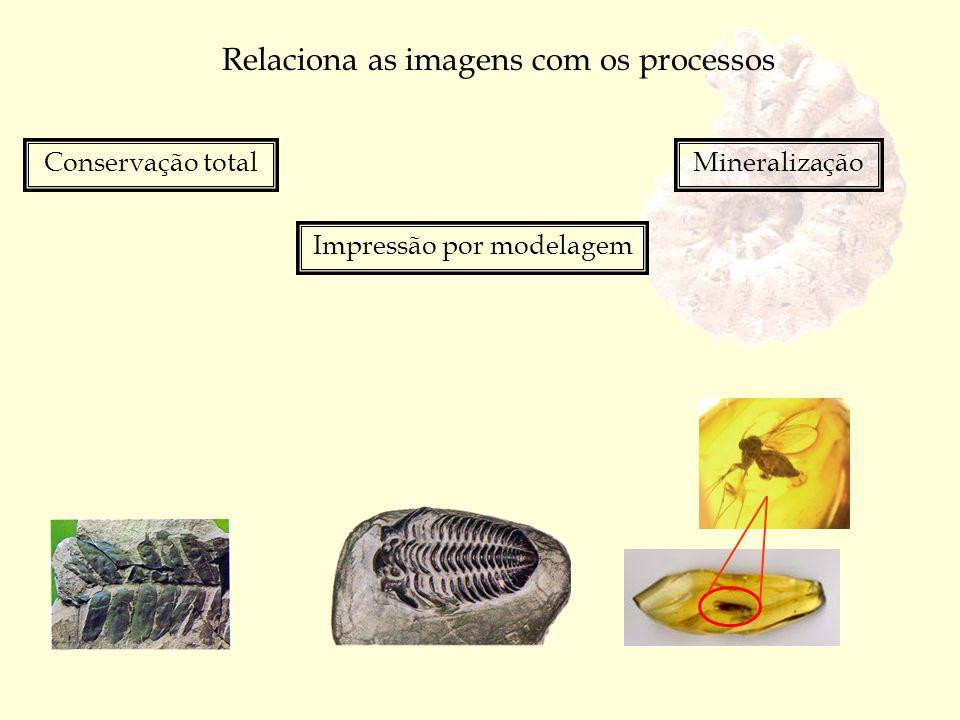 Relaciona as imagens com os processos
