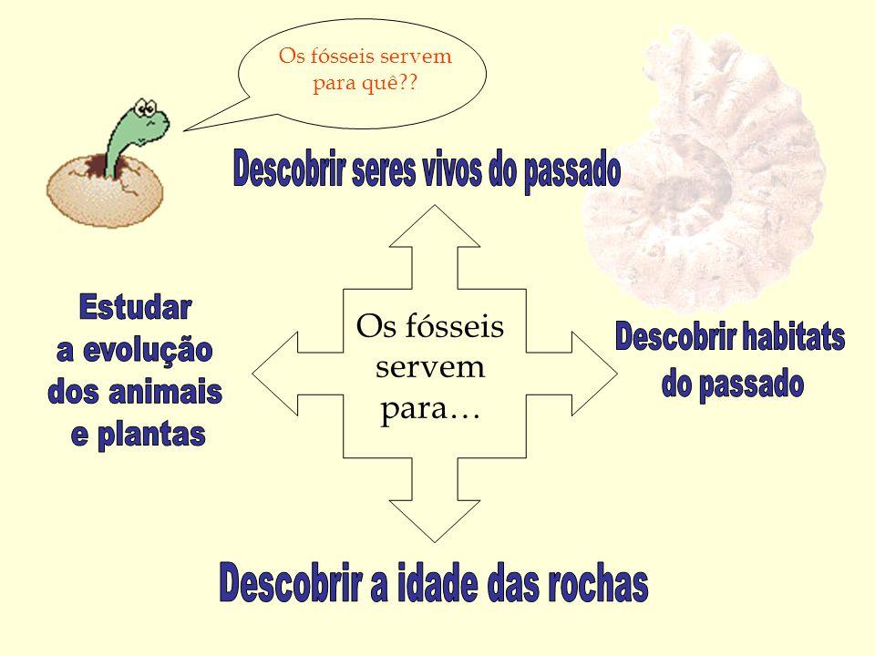 Os fósseis servem para…