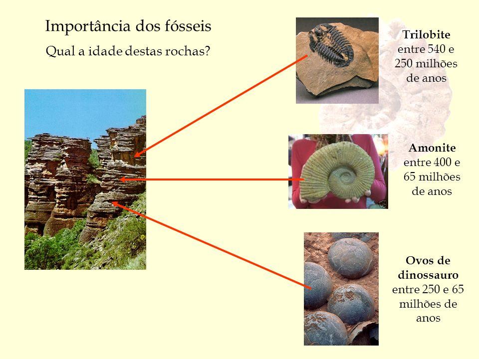 Importância dos fósseis