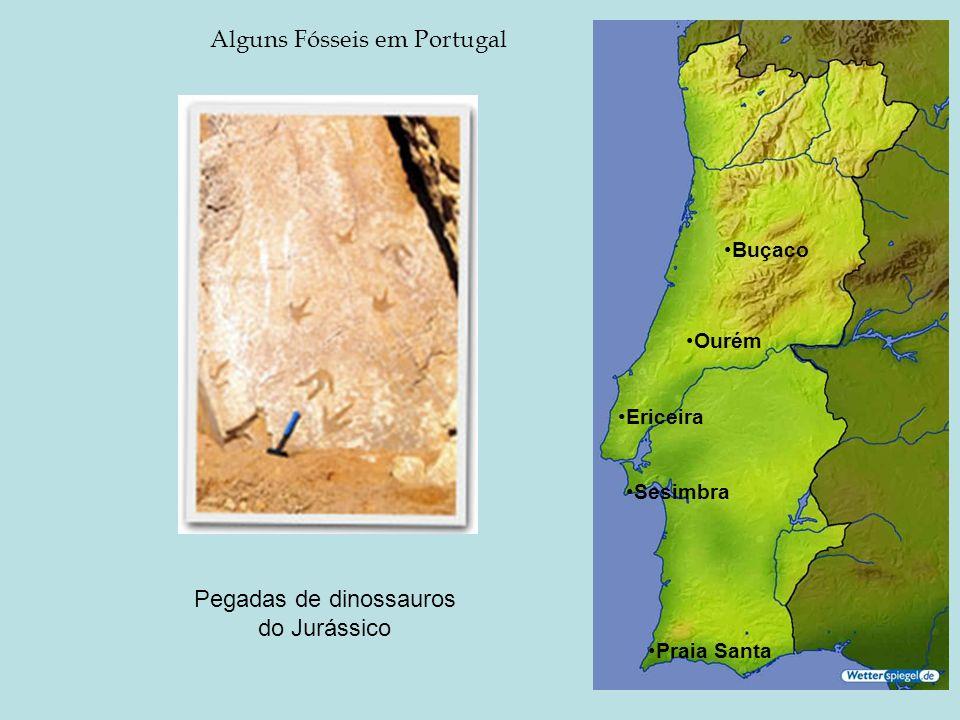 Alguns Fósseis em Portugal