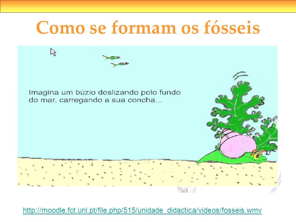 Como se formam os fósseis