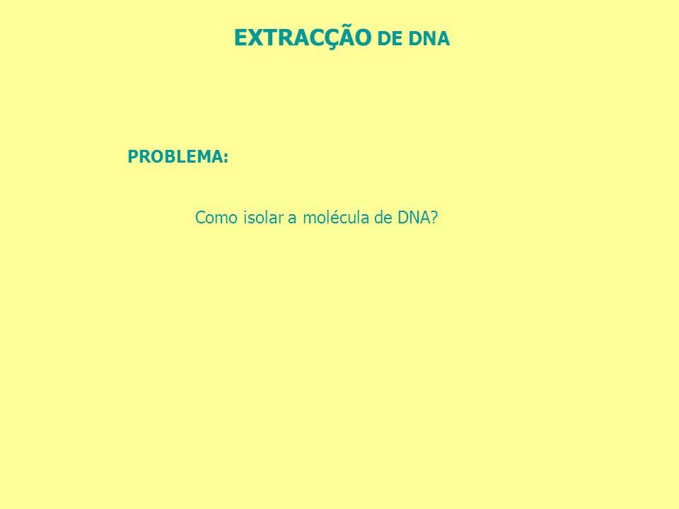 EXTRACÇÃO DE DNA PROBLEMA: Como isolar a molécula de DNA