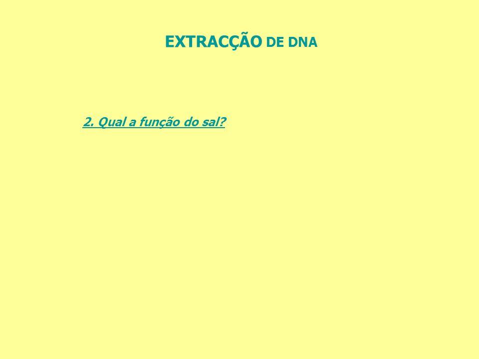 EXTRACÇÃO DE DNA 2. Qual a função do sal