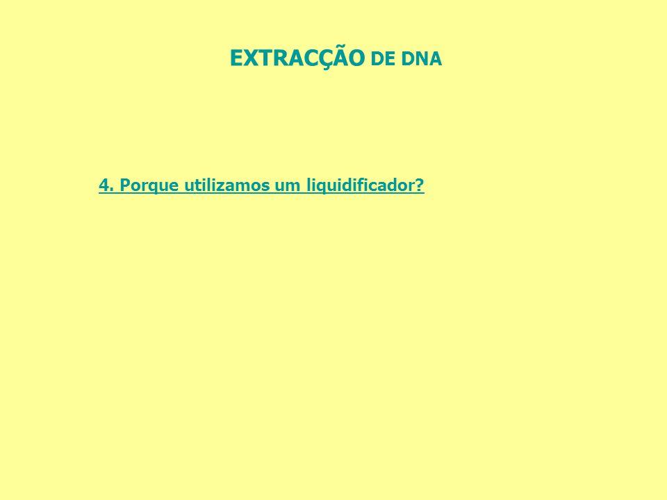 EXTRACÇÃO DE DNA 4. Porque utilizamos um liquidificador
